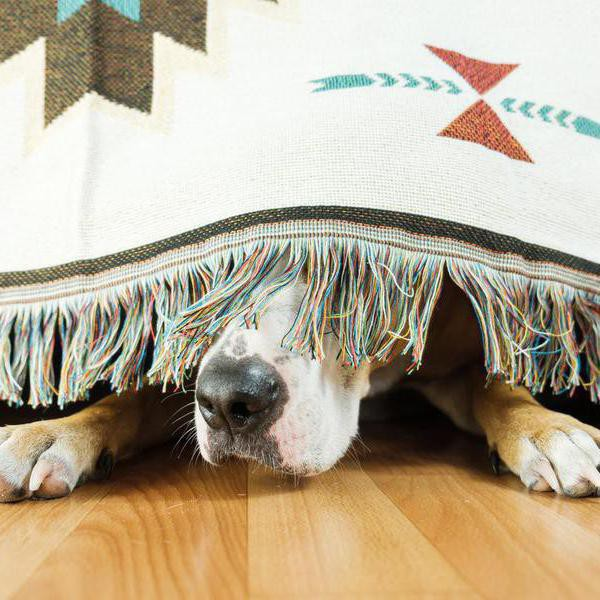 30 Best Ways to Calm Your Dog During Storms and Fireworks