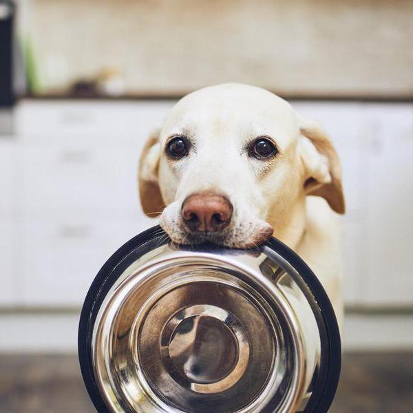 10 Best Online Dog Food Delivery Services